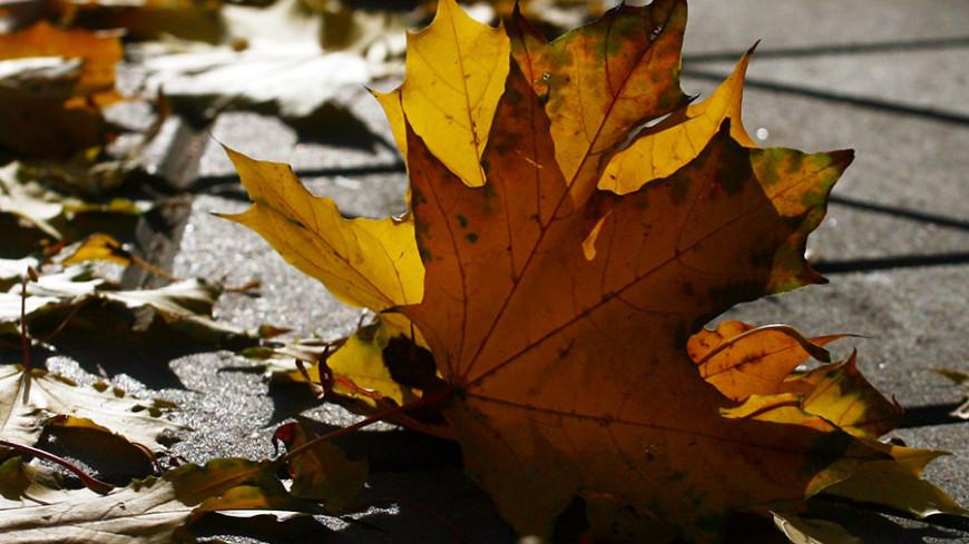 Последняя неделя октября в Москве будет теплой