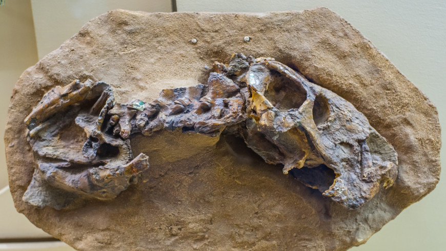 В Канаде 12-летний мальчик обнаружил скелет редкого динозавра