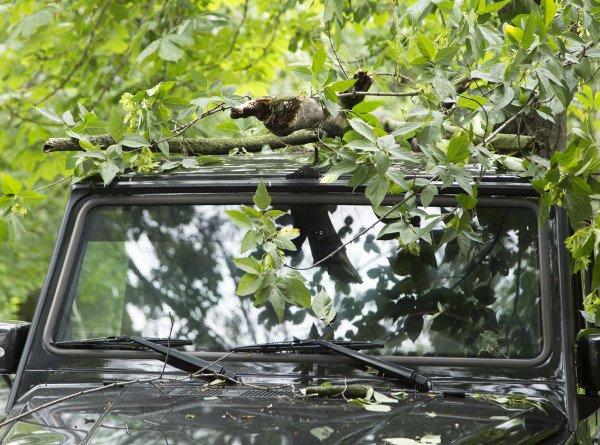 Ветер в Москве уничтожил более 100 деревьев, повреждены несколько десятков авто