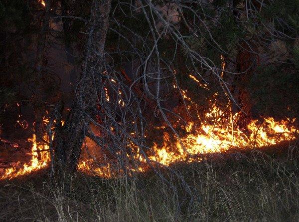 Лесной пожар на севере Калифорнии унес жизни троих человек