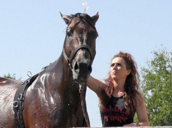 Незаслуженно забытая: в Кабардино-Балкарии возрождают легендарную породу лошадей