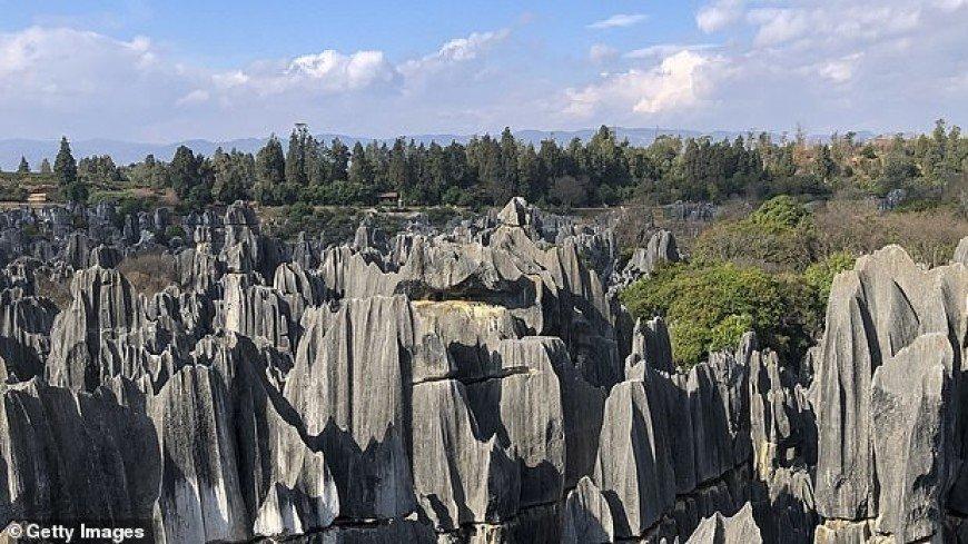 Тайну древних каменных лесов раскрыли при помощи леденцов