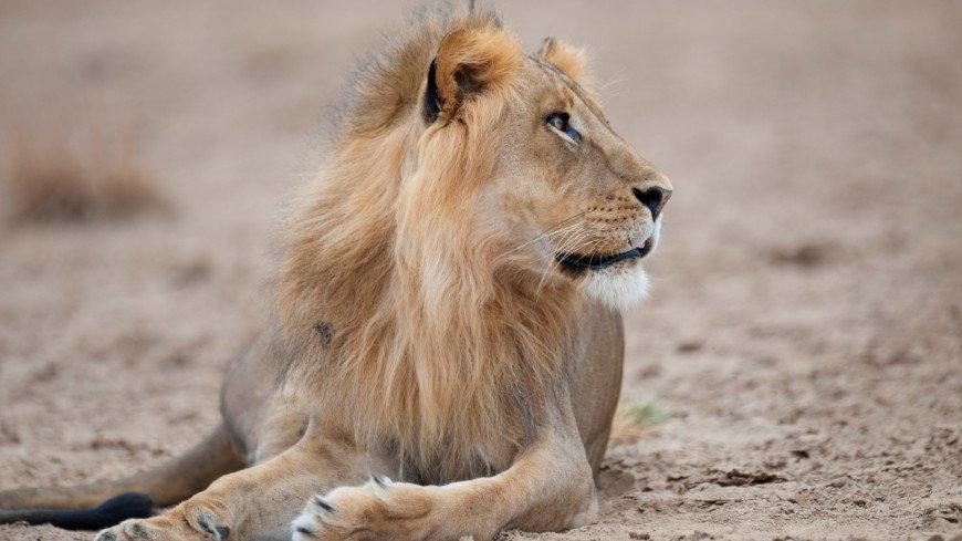 Одессит забрался в вольер со львами ради эффектного селфи