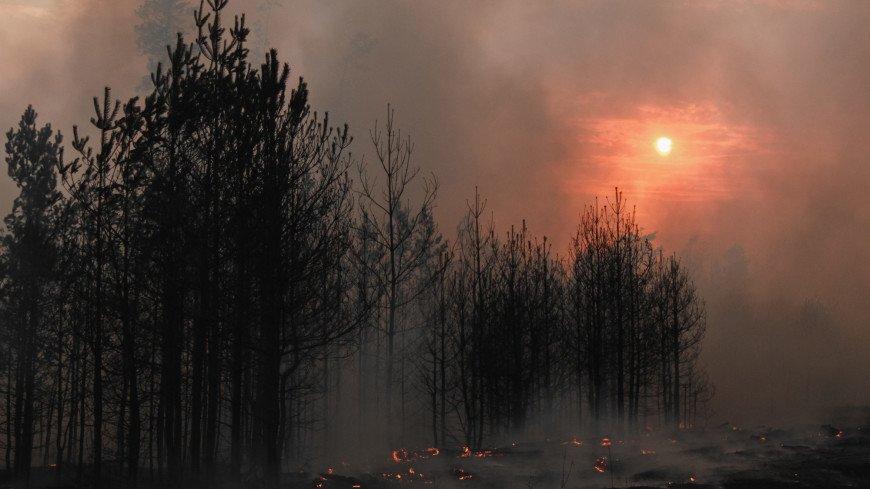 Огненный шторм в Воронежской области: природные пожары сравнили с фильмом-катастрофой