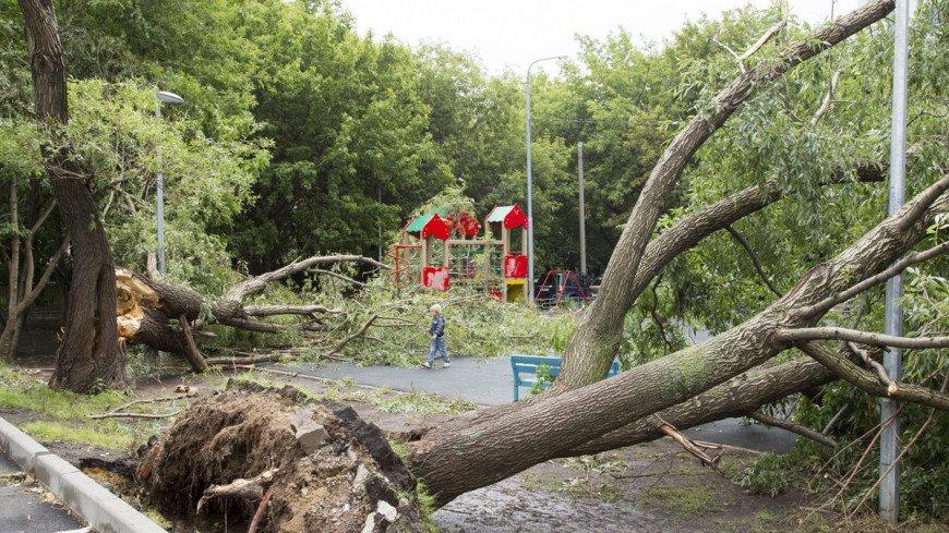 Штормовой ветер в Петербурге повалил 458 деревьев
