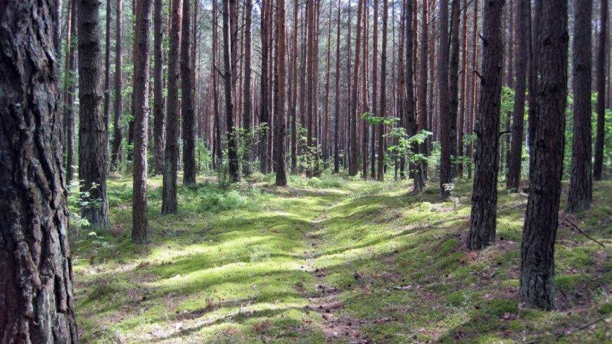Житель Бийска во время «тихой охоты» в лесу нашел осколок метеорита
