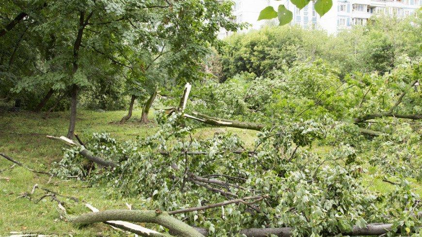 "Фото: Максим Кулачков (МТРК «Мир») ""«Мир 24»"":http://mir24.tv/, гроза, упало дерево, дерево, ураган, шторм, ветер, ливень, дождь"