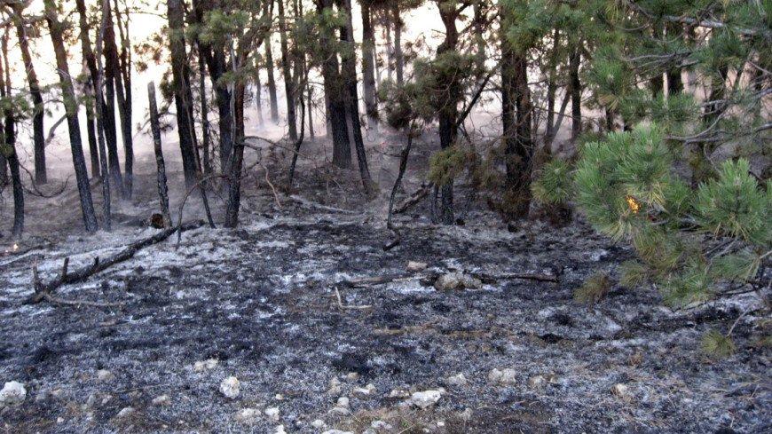 В Воронежской области ликвидировали крупный природный пожар площадью 168 га