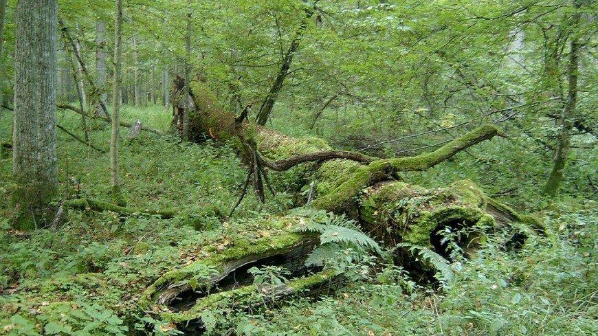 В РГО рассказали о разрушении древнего реликтового леса на Чукотке