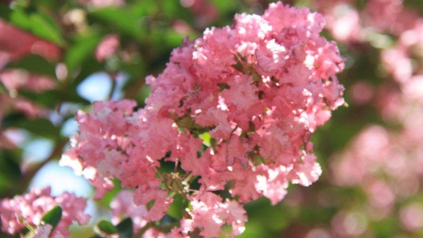 Природа, деревья, цветы, погода, дерево, природа