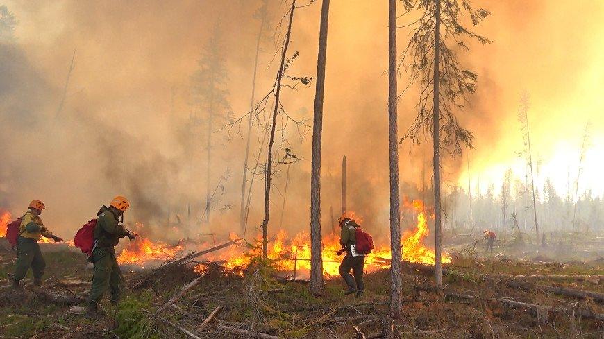 В Ростовской области ликвидирован лесной пожар на площади более 1,5 тысячи га