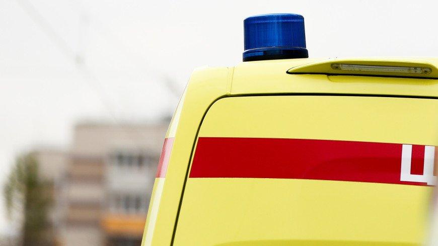 Четыре человека погибли при столкновении автомобиля с лосем под Псковом