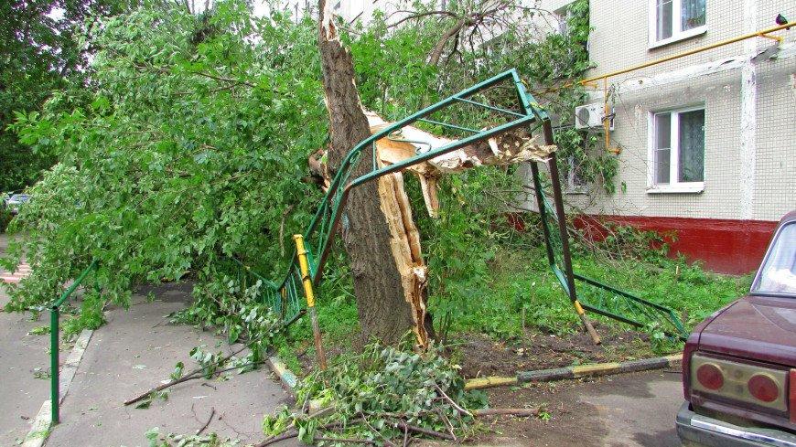 Во дворе московской пятиэтажки сломанное дерево выбило окно на третьем этаже