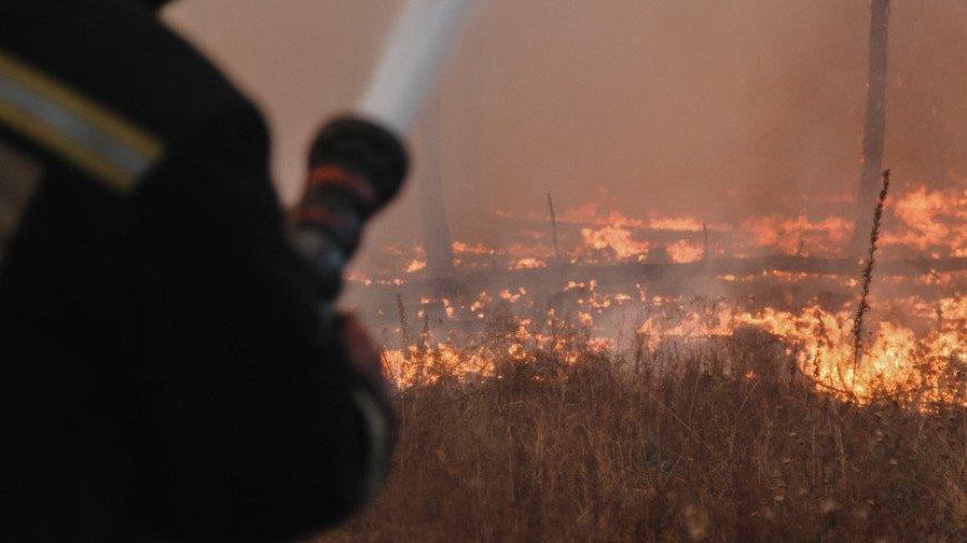 Воронеж в огненном кольце: природные пожары уничтожают леса, поля и деревни