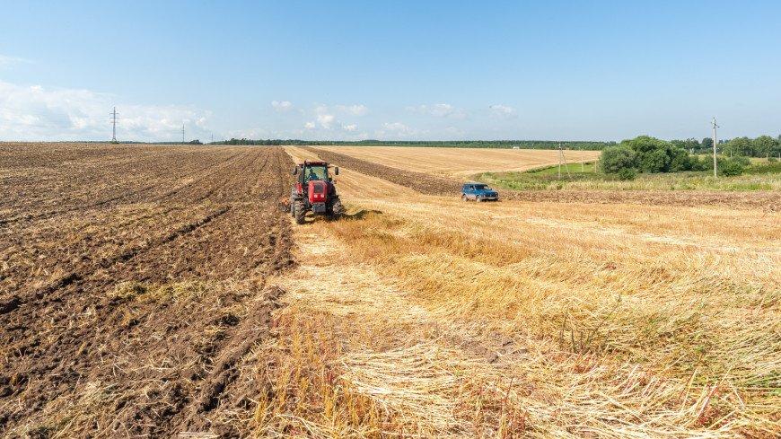 Bloomberg: Россия – уверенный лидер на мировом рынке пшеницы