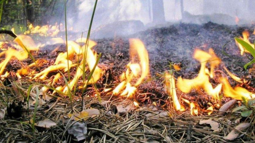 В Магаданской области возникли семь очагов лесных пожаров