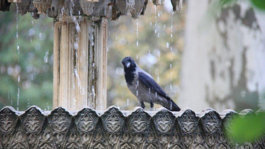 Нейробиологи доказали способность птиц переживать субъективный опыт