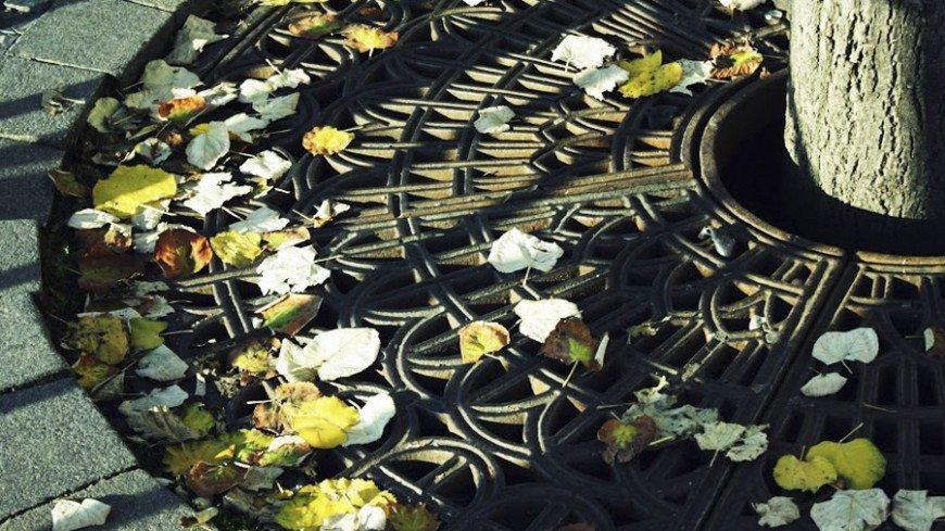 """Фото: Елена Андреева, """"«Мир24»"""":http://mir24.tv/, листья, осень"""