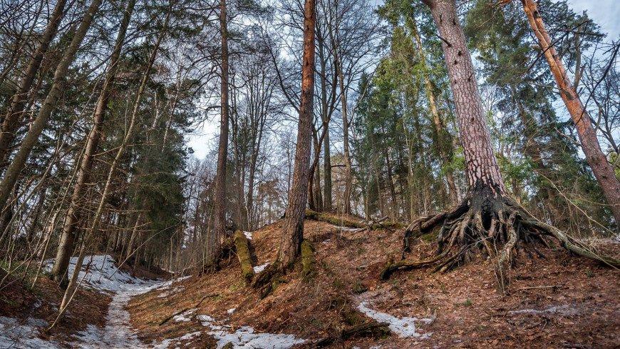 Весна пришла в лес