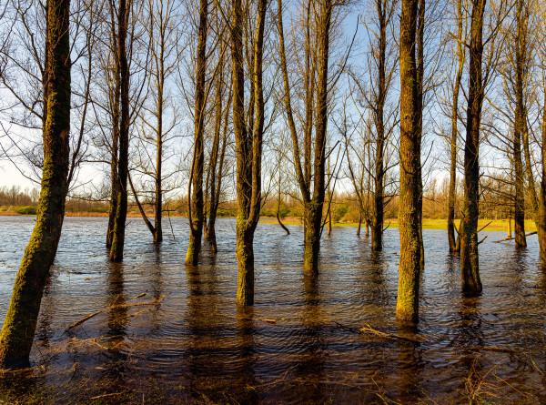 Весенний паводок: в Казахстане подтопило 46 населенных пунктов с начала весны