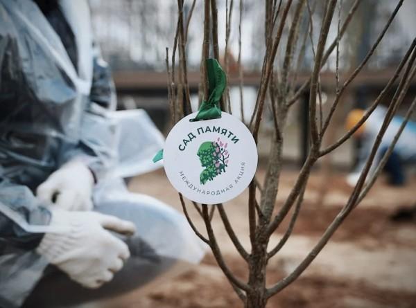 Участники акции «Сад памяти» высадили уже 15 миллионов деревьев