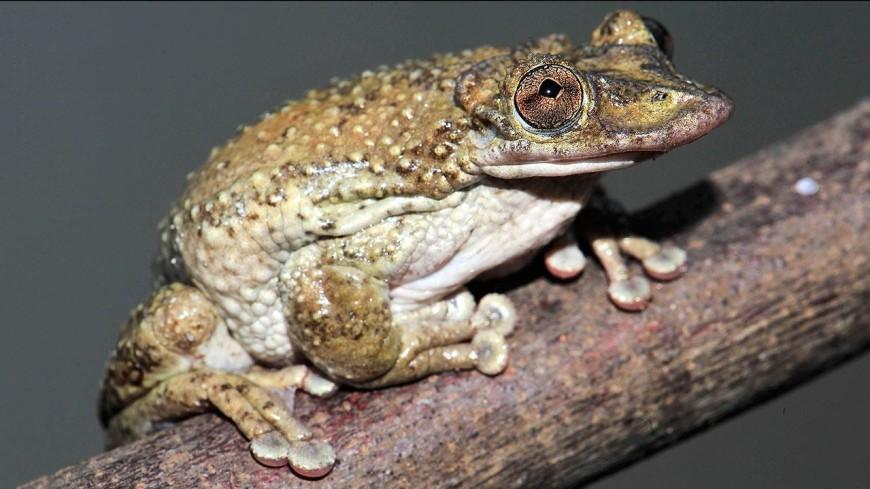 В Бразилии открыли новый вид ядовитых светящихся лягушек