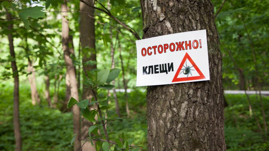 На природе может подстерегать незаметная опасность — клещи,парк, природа, лес, клещ, клещи, энцефалит