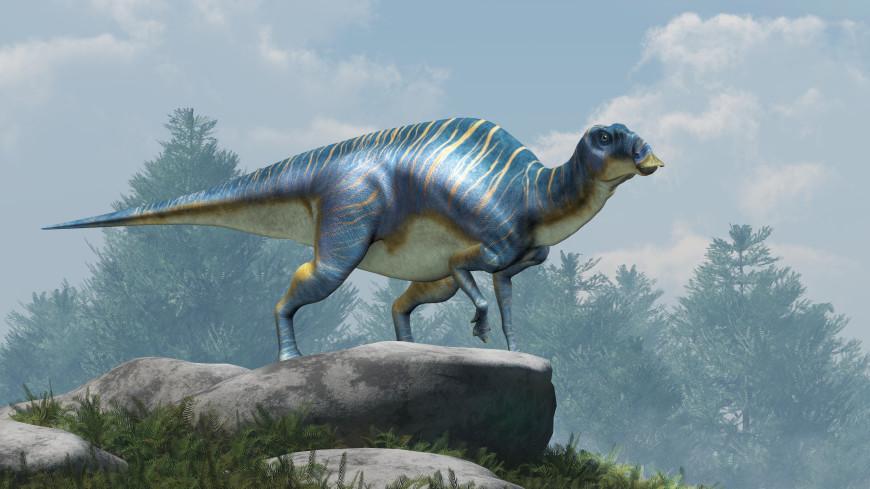 В Японии нашли кости утконосого динозавра со странными зубами