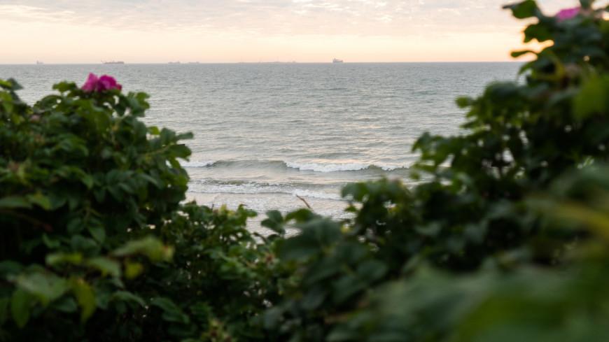 Зеленоградск, Море, шиповник
