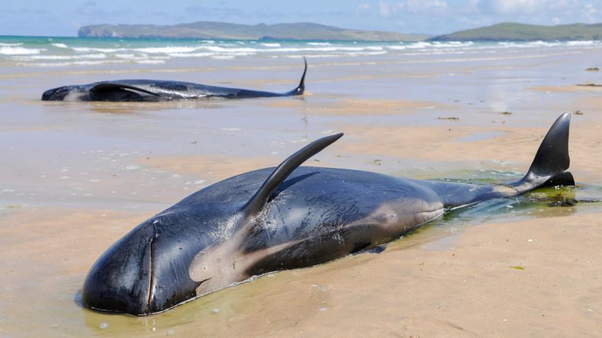На берег Калифорнии выбросило четырех погибших китов