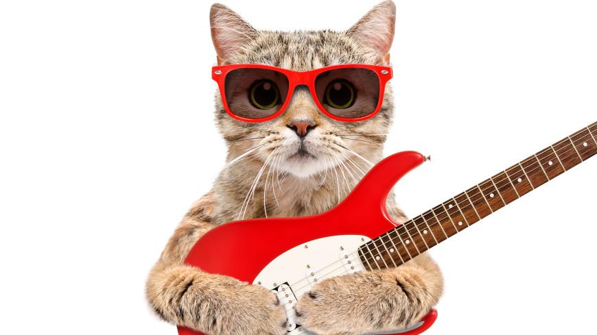 В США появилась метал-группа из котов (ВИДЕО)