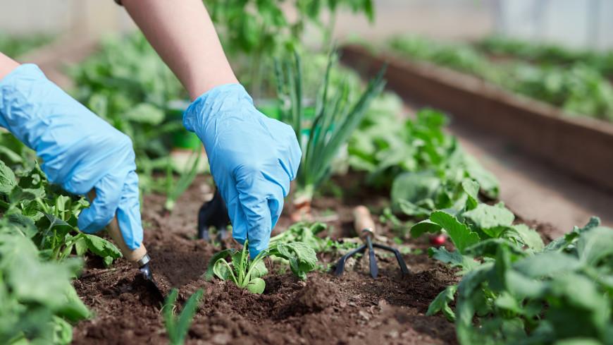 Лайфхаки для садоводов: как вырастить богатый урожай