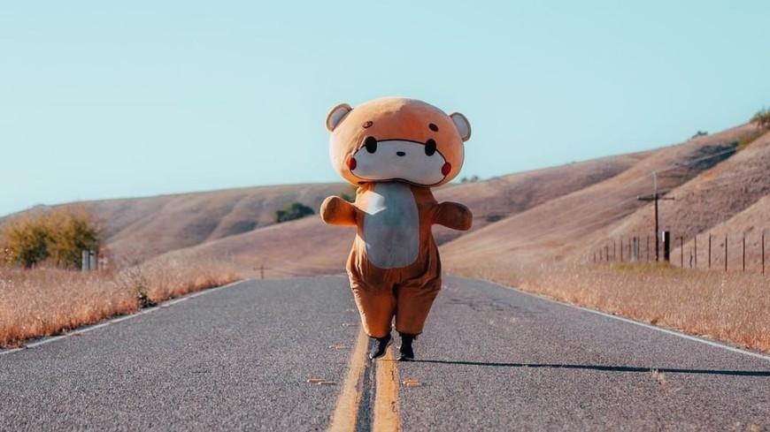 Американец в костюме медведя преодолел 770 км и собрал $17 тысяч на благотворительность