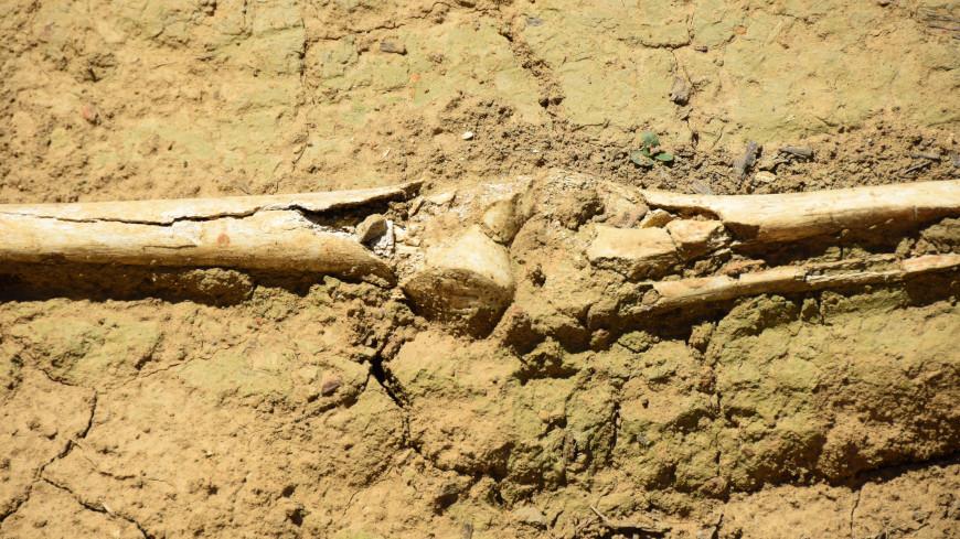 В Кении обнаружили кости первых людей на Земле