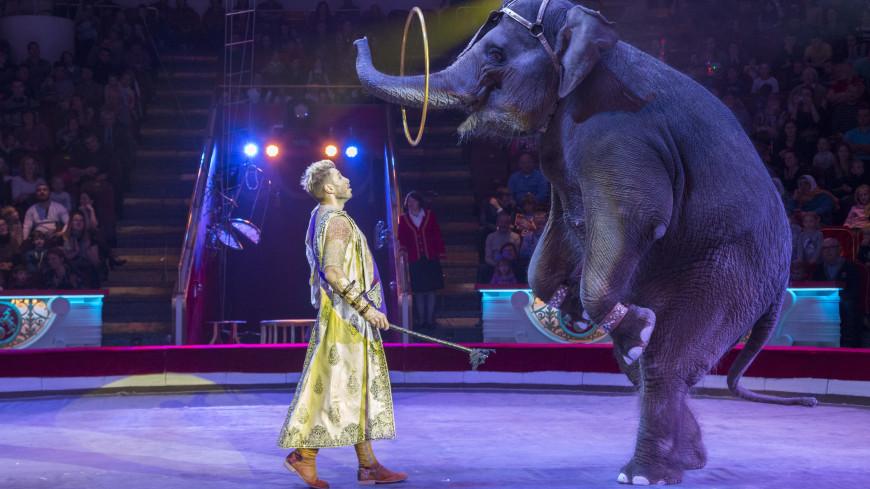 «Цирк – это образ жизни»: Андрей Дементьев-Корнилов о дрессуре слонов, сафари-парке и отношении к животным в цирке