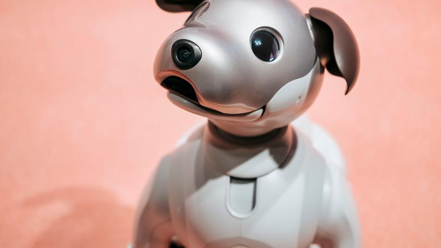 Шустрая, не лает и не кусается: в КНР создали робота-собаку с искусственным интеллектом