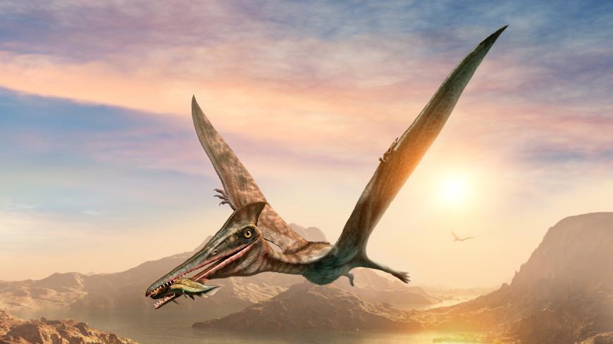 Длиннее, чем у жирафа: шею птерозавров назвали «чудом биологии»