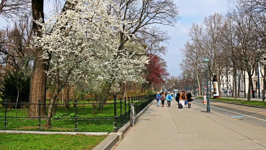 "Фото: Мария Чегляева (МТРК «Мир») ""«Мир 24»"":http://mir24.tv/, австрия, весна, цветение"