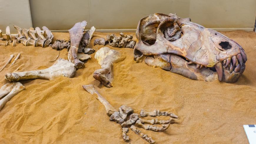 Бразильские ученые воссоздали мозг динозавра