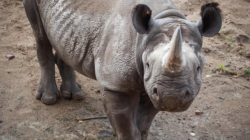 Шведские генетики секвенировали геном суматранских носорогов