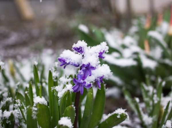 Погода сошла с ума: Краснодар засыпало снегом, в Башкирии – торнадо