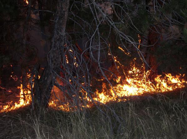 Пять человек пострадали из-за лесных пожаров в итальянской Пескаре