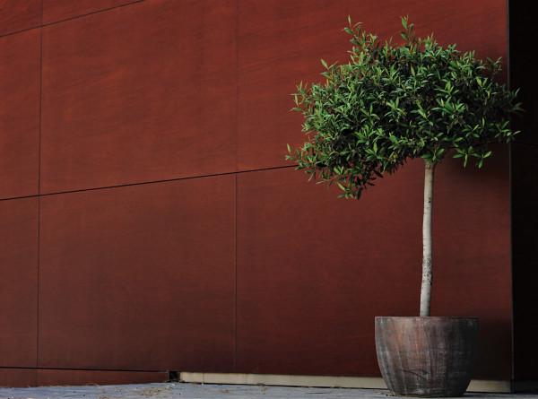 Девушка украла 40-килограммовую кадушку с деревом из губернаторского сада в Екатеринбурге