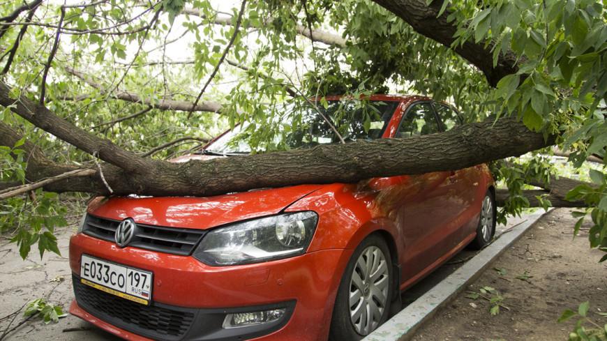"Фото: Максим Кулачков (МТРК «Мир») ""«Мир 24»"":http://mir24.tv/, разбитая машина, упало дерево, дерево, ураган, шторм, ветер, машина, ливень, дождь, гроза"