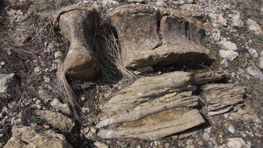 Археологи обнаружили на дне реки под Новосибирском кости древних животных