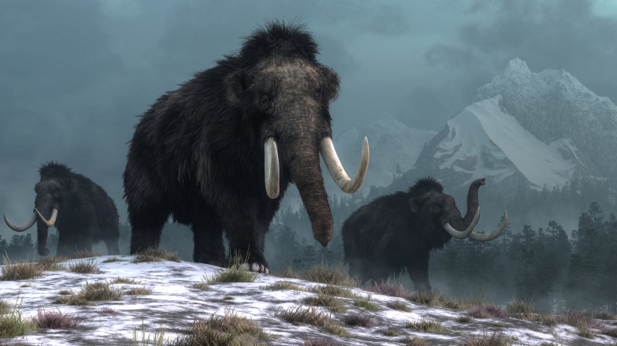 Древние мамонты могли дважды обогнуть земной шар
