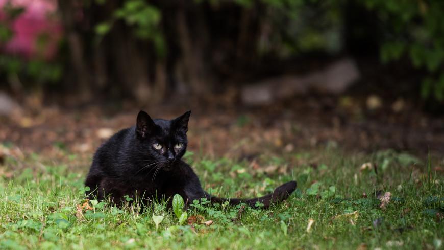 Бесстрашный Вася: черный домашний кот дал отпор медведю в Якутии