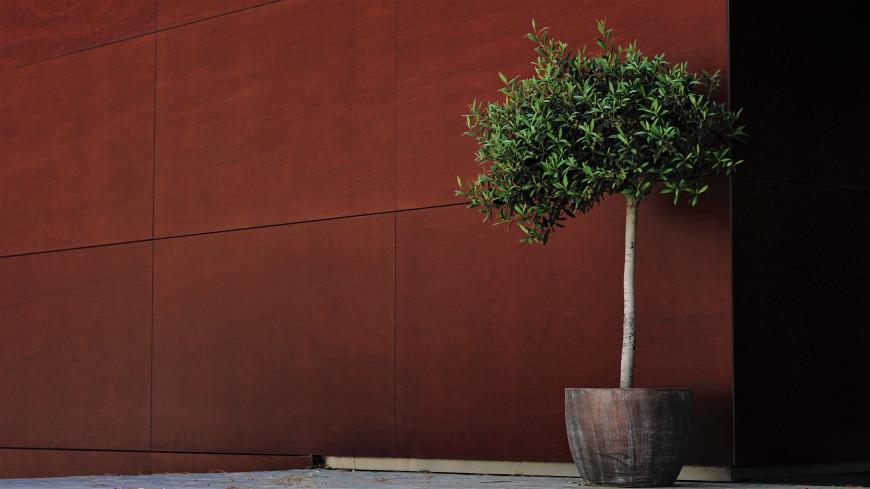Девушка украла 40-килограммовую кадушку с деревом из губернаторского сада в Екатеринбурге (ВИДЕО)