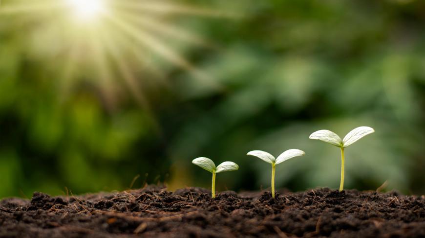Скорлупа, дрожжи и шелуха: проверенные способы защитить растения и улучшить качество почвы