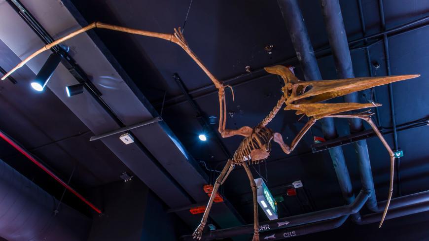 В Бразилии изучили самый полный скелет птерозавра